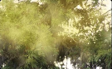 日本で花粉症に悩む人が多い理由